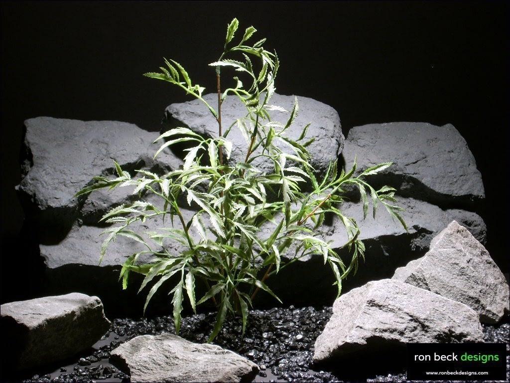 aquarium plants ming arailia parp022 plastic  ron beck designs