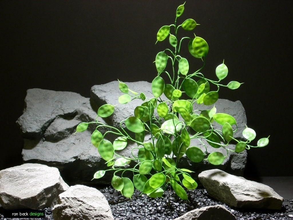 aquarium plants money tree green pap210 plastic  ron beck designs