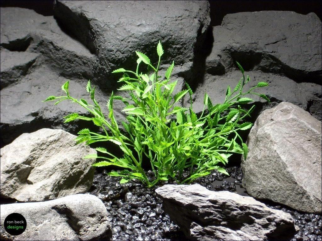aquarium plants thyme bush parp051 plstc. ron beck designs