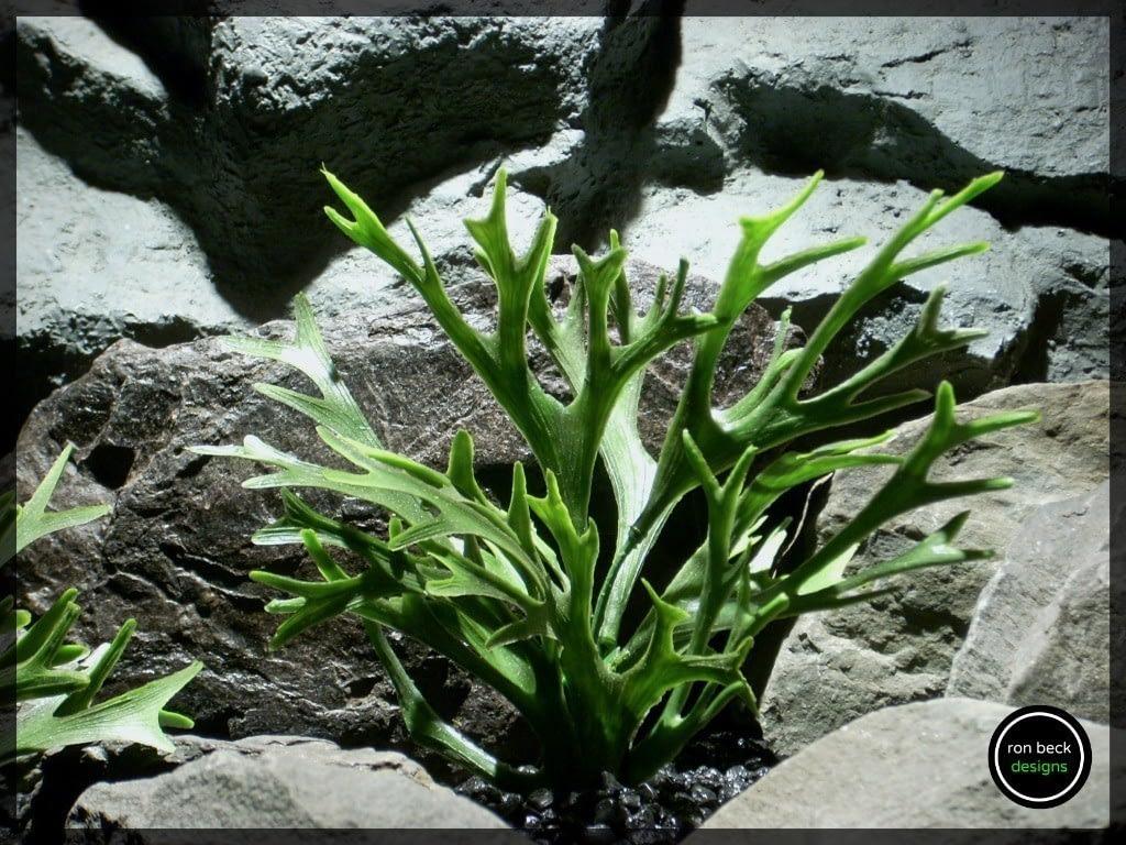 plastic aquarium plants | faux staghorn ferns from ron beck designs. pap213 2