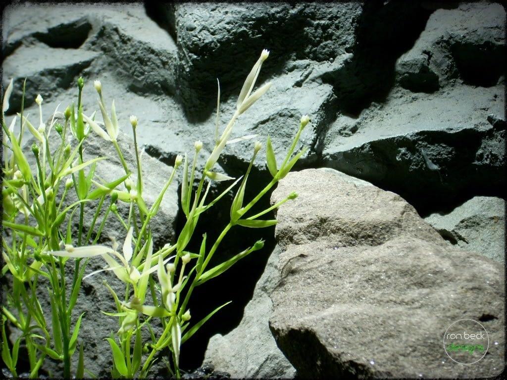 Artificial Water Grass Plot - Artificial aquarium plant - parp318 3