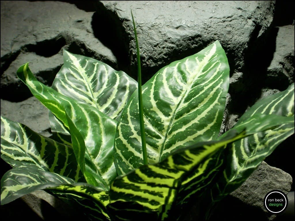 silk reptile plant zebra leaves real touch leaves from ron beck designs