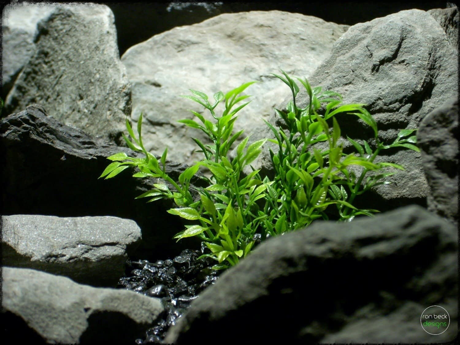 artificial plants_ mini leaves artificial aquarium plants pap257 3