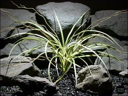 plastic aquarium plants | mad grass