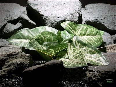 silk aquarium plants Syngonium podophyllum sarp084 ron beck designs