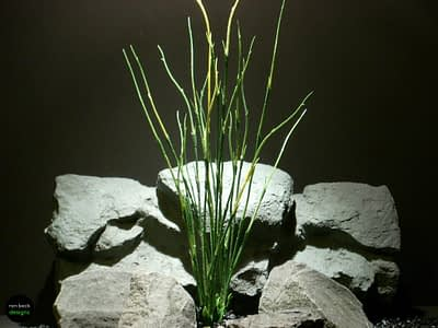plastic aquarium plants high reeds pap091 ron beck designs