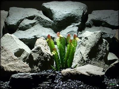 Artificial Cactus Plant - Artificial Reptile Plant - prs306