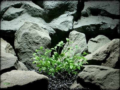 Tea Plant Bush - Artificial Aquarium Plant - Ron Beck Designs pap314