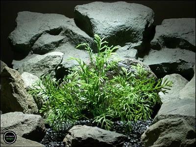plastic aquarium plant dill bush pap183 from ron beck designs