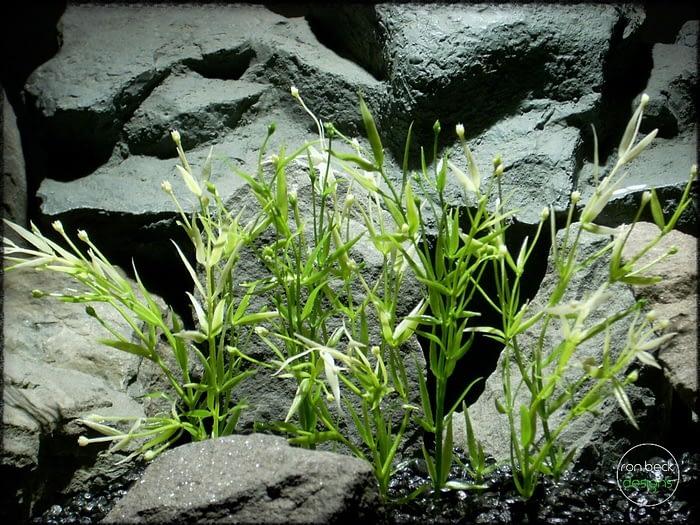 Water Grass Plot - Artificial aquarium plant - parp318 2