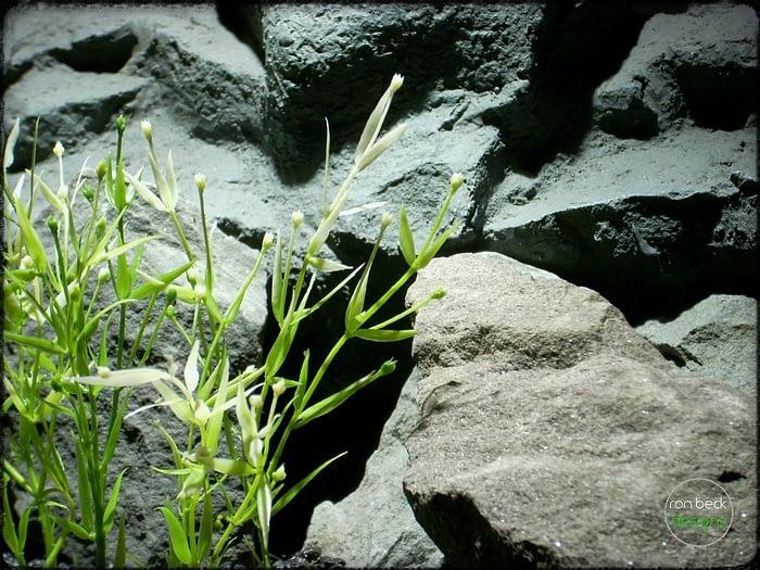 Water Grass Plot - Artificial aquarium plant - parp318 3