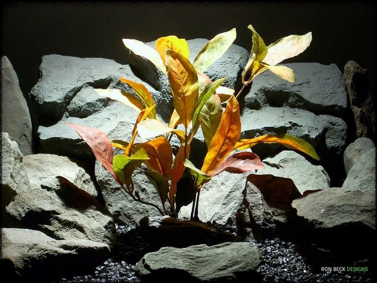Mountain Laurel Fall Colors srp313 silk ron beck designs