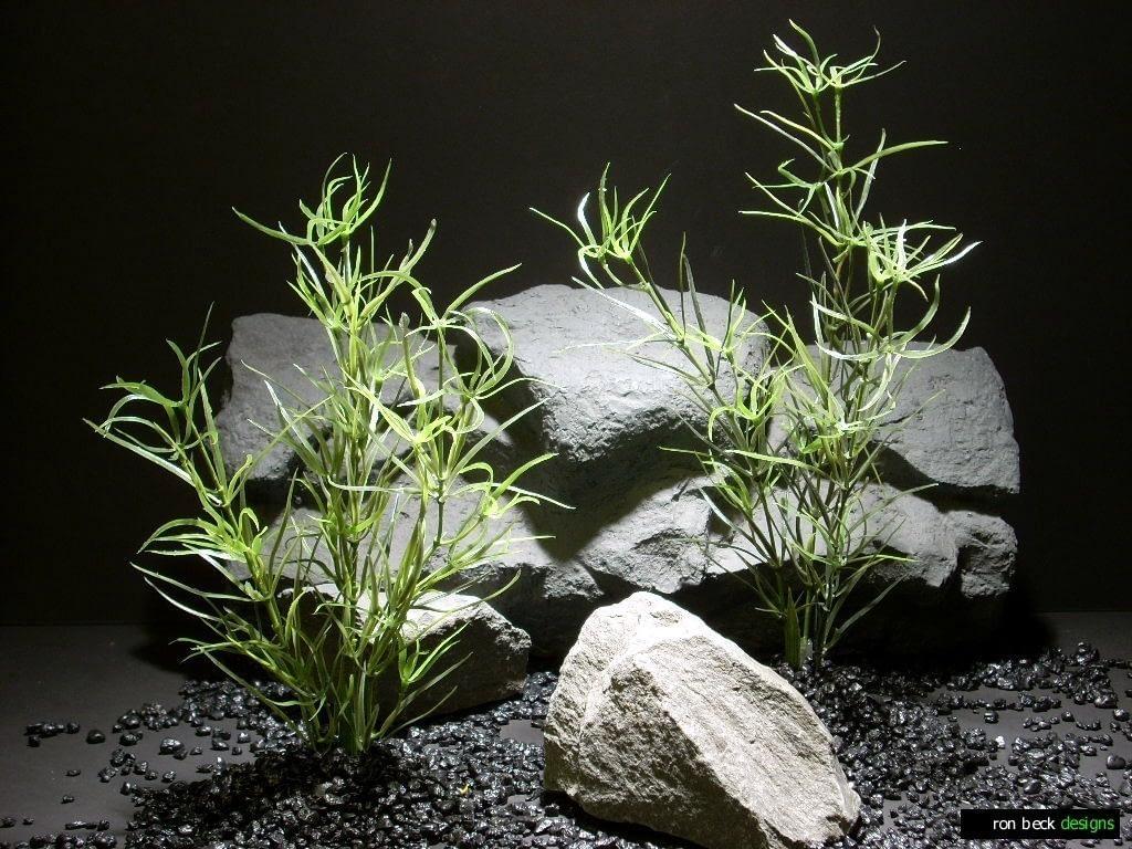 aquarium plants asparagus spray pap199 ron beck designs