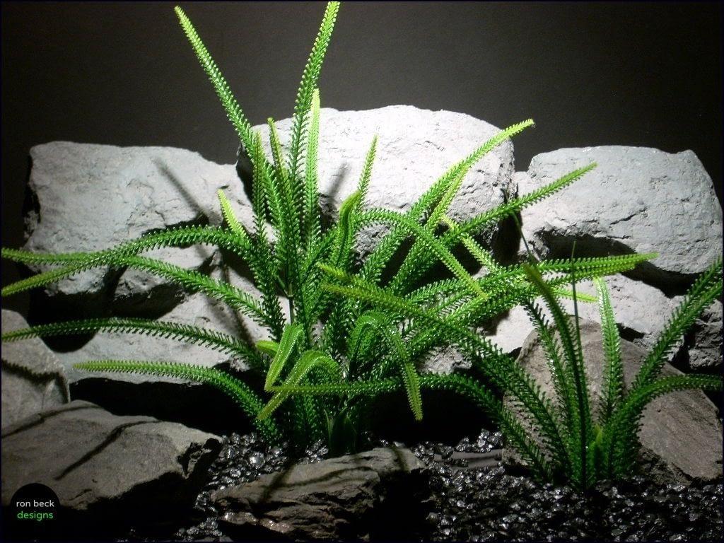 aquarium plants tail grass pap063 plstc. ron beck designs