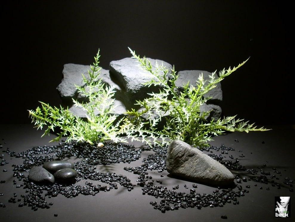 plastic aquarium plants thistle fern pap167 plastic. ron beck designs