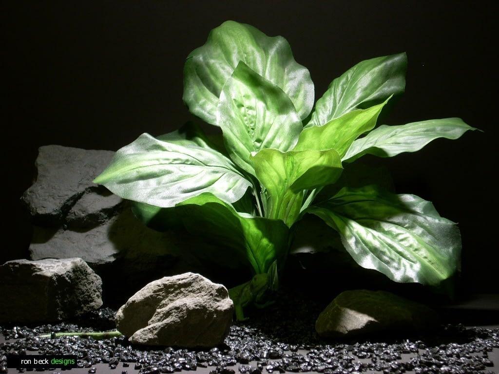reptile habitat plants hosta leaves sap 413 silk  ron beck designs