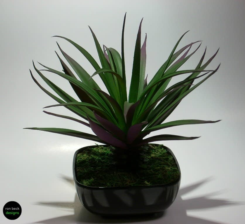 home decor succulent hd001  by ron beck designs
