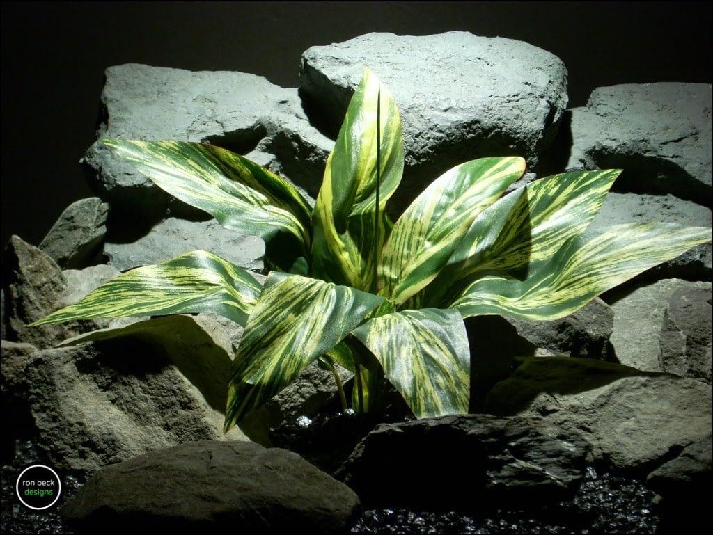 silk-aquarium-plant-or-silk-reptile-plant-dracaena-leaves-sarp159