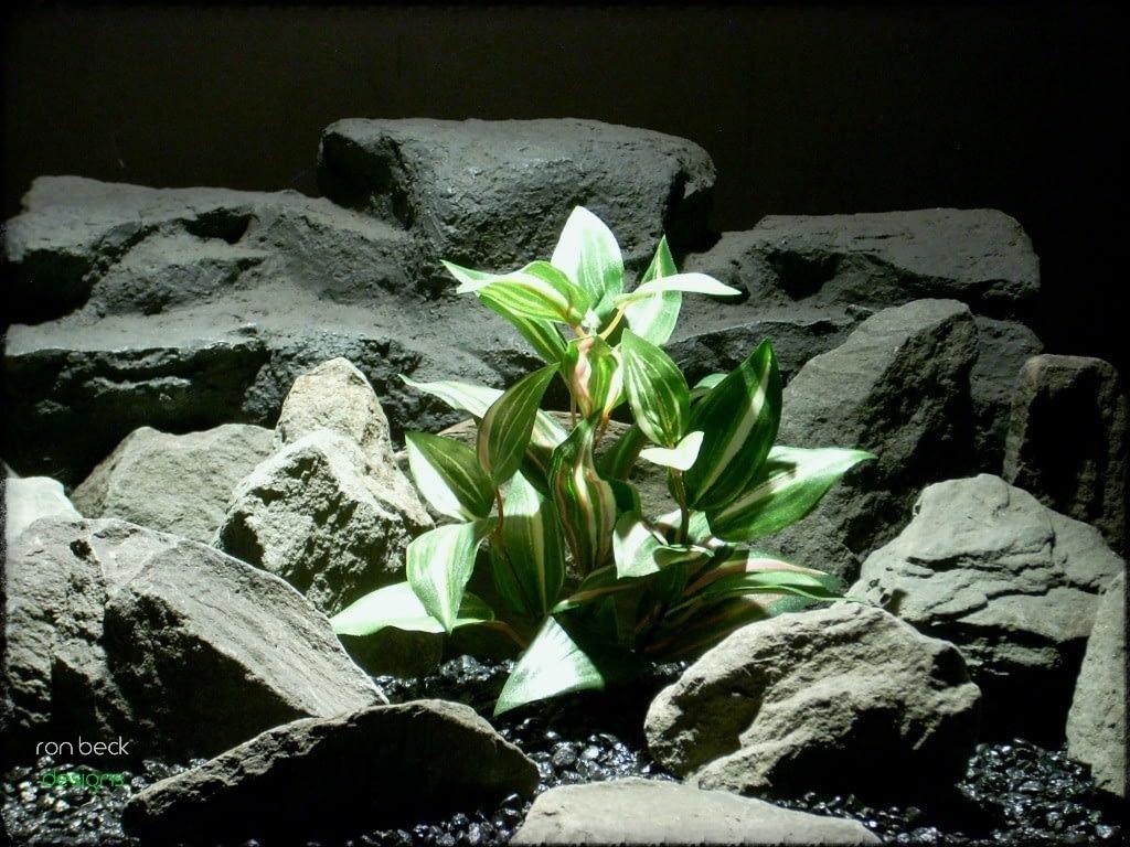 silk aquarium plant: wandering jew sarp230