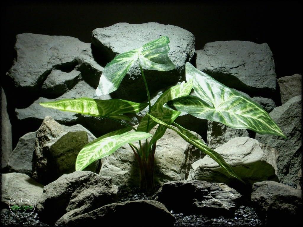 Syngonium podophyllum silk reptile plant srp245