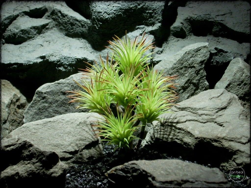 Artificial Tillandsia (mint) Artificial reptile plant prs268 2