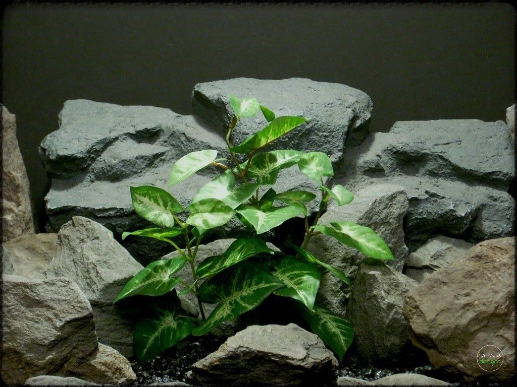 Syngonium podophyllum Mini silk reptile plant srp279